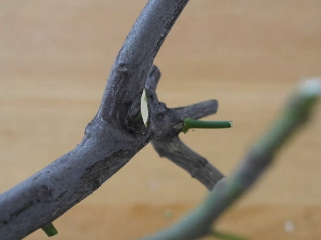 branch cut by concave