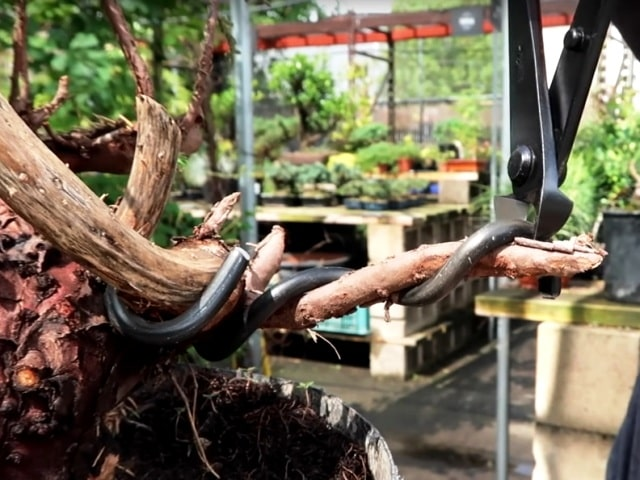 bonsai wire cutter in action