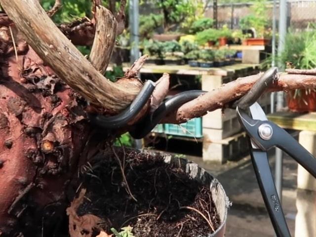 wire scissors for bonsai