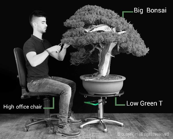 bonsai work with a turntable
